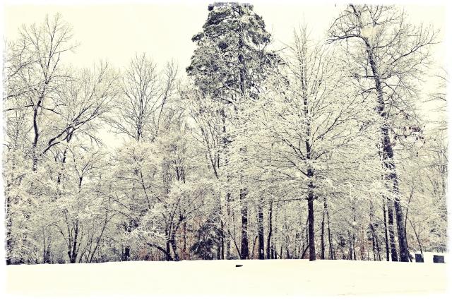snow_trees_fr_sm